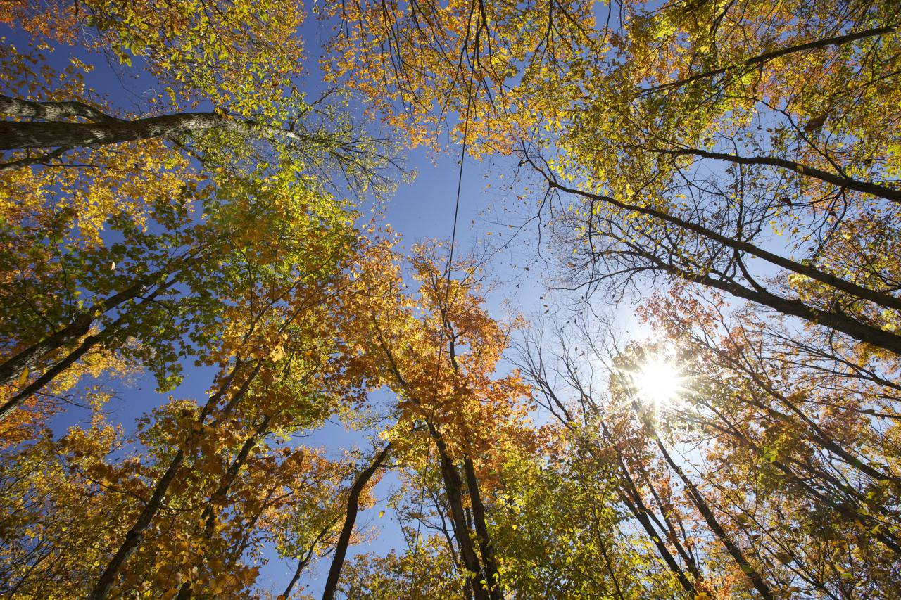 Ontario Image of forrest © 2021 Ontario Tourism Marketing Partnership Corporation