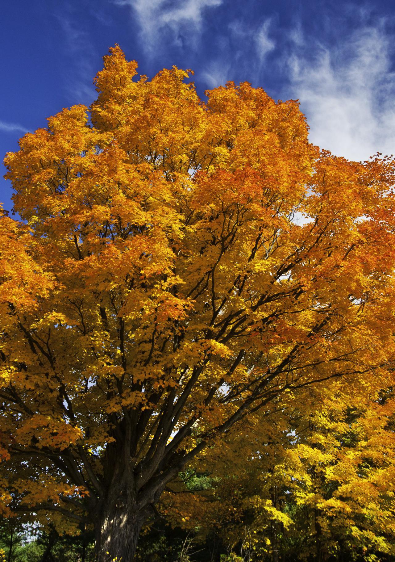 Image of tree in fall colours