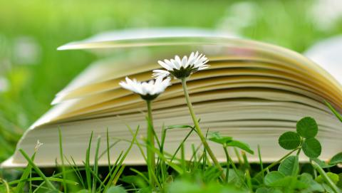 image of open book on grass